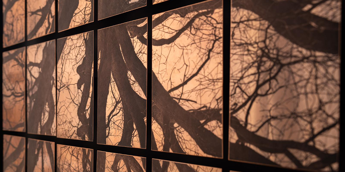 Arboris - Création Fanny Boucher © Edouard Elias